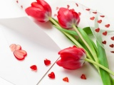 Red Tulips For Womens Day