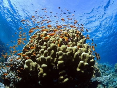 Reef Fish (click to view)