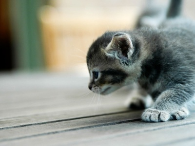 Small Kitty (click to view)