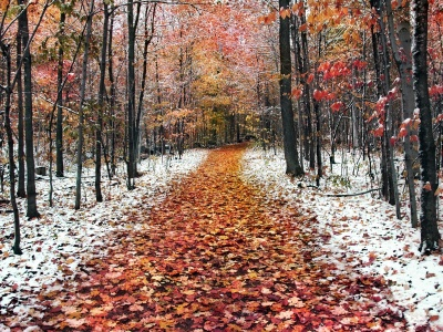 Snow Leaves Forest Roads Nature Landscape