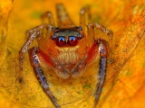 Spider On The Autumn Leaf