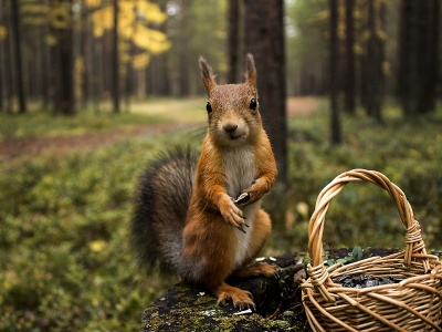 Squirrel Forest Basket Close Up (click to view)