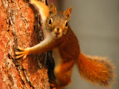Squirrel On Tree (click to view)