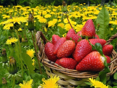 Strawberries In Basket And Dandelions (click to view)