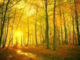 Sunlight In The Autumn Forest