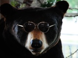 The Cool Bear