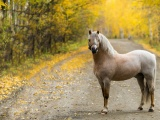 The Horse On The Road In The Fall