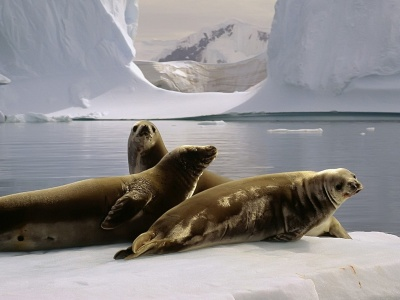 Three Seals