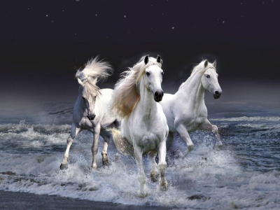 Three White Horses (click to view)