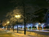Trees Park Winter Ornament Decor Street Night City Landscape