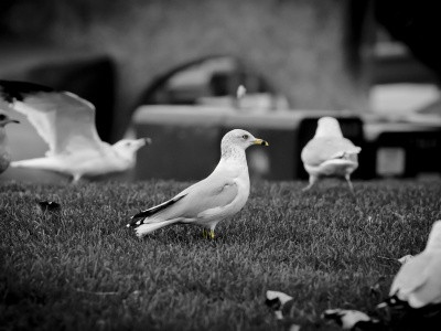 White Doves1 (click to view)