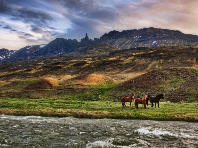Wild Horses1 (click to view)