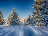 Winter Snow Fir Trees Nature