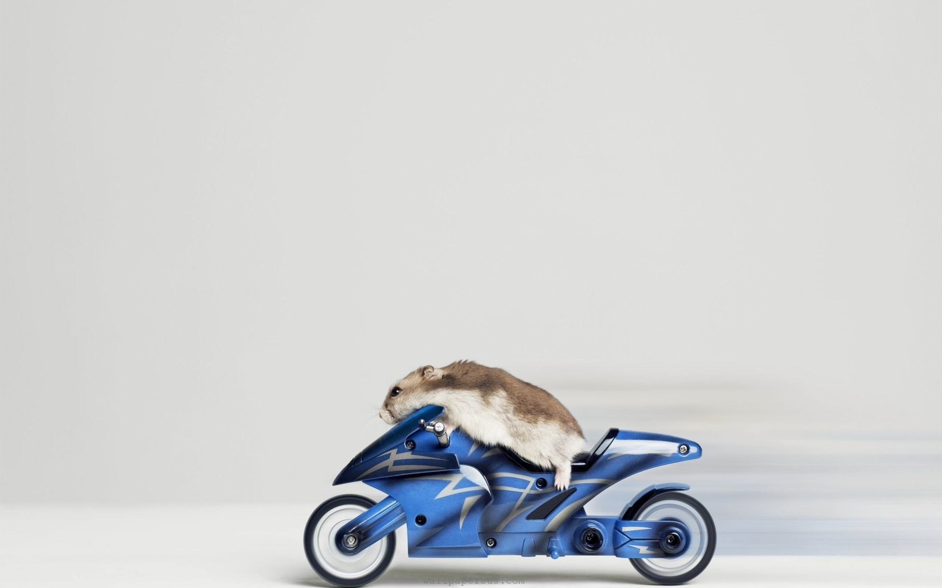 Animal Mouse Motorbikes Riding Hammster