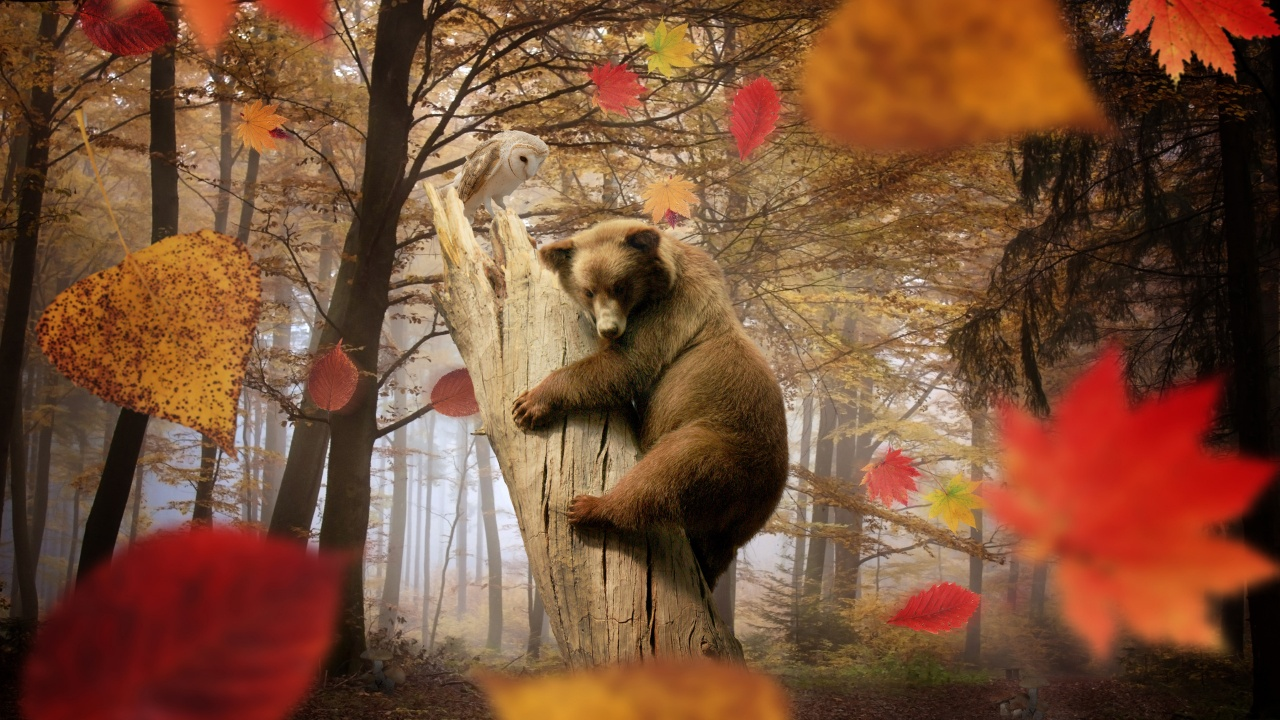 Bear Autumn Owl