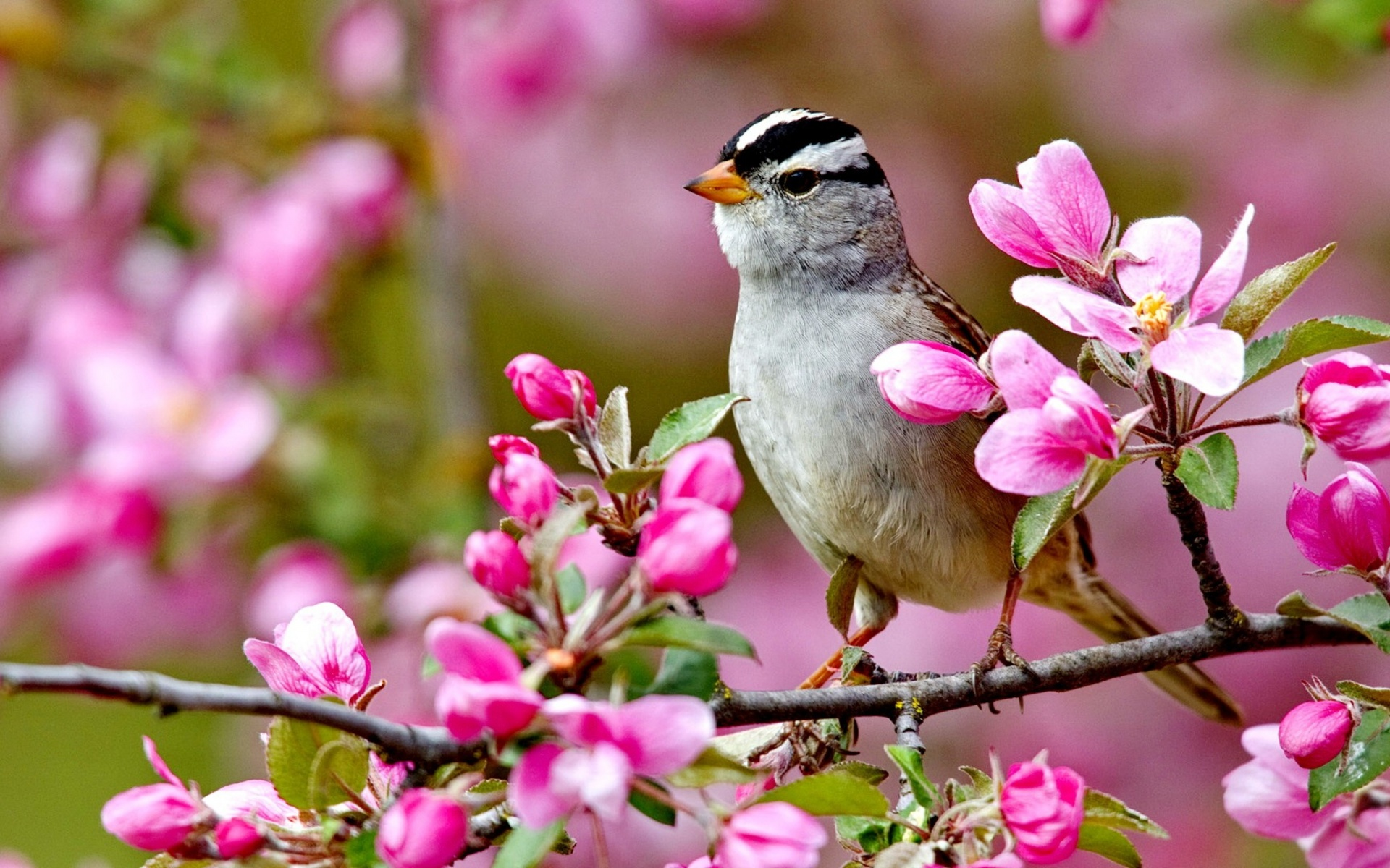 Bird On A Blossom Branch Spring