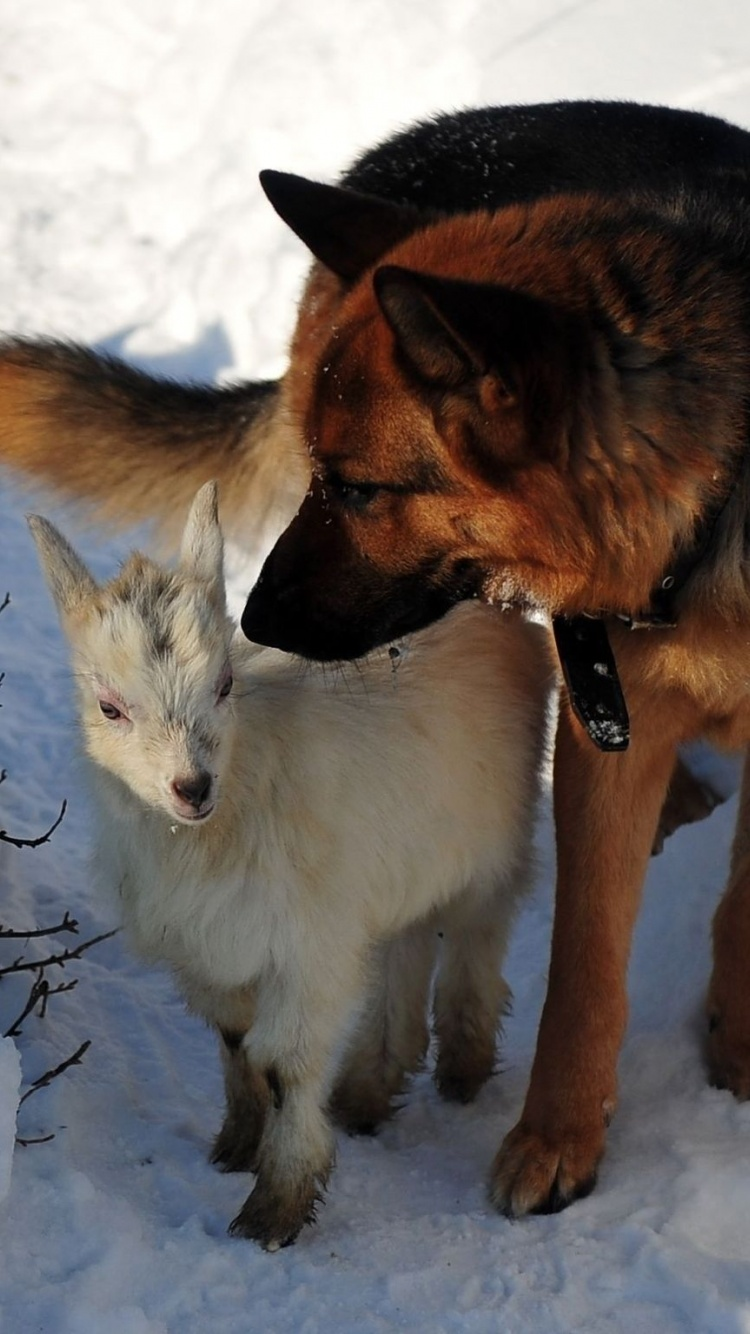 Dog Hunting Snow Winter