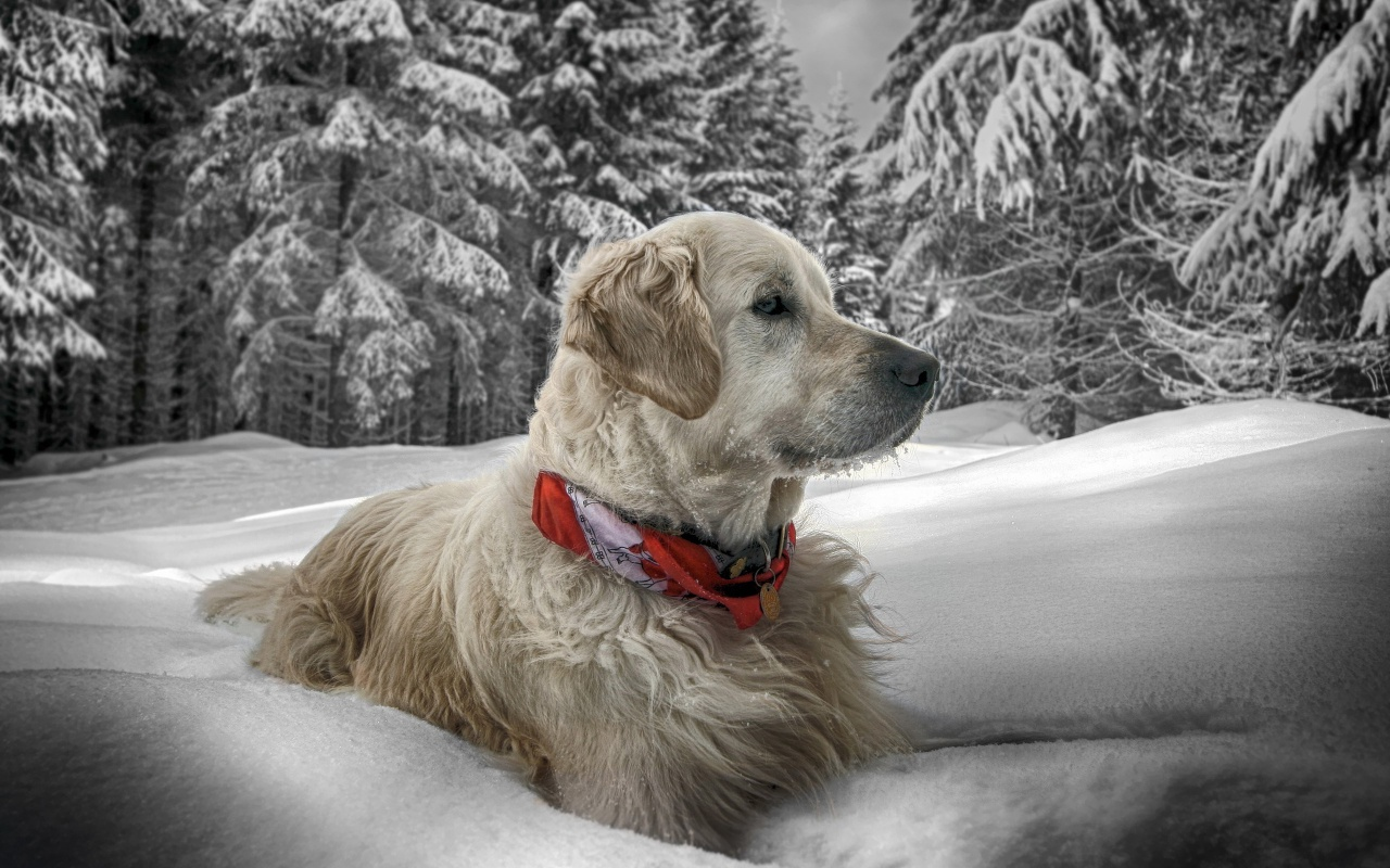 Dog In Snow Winter