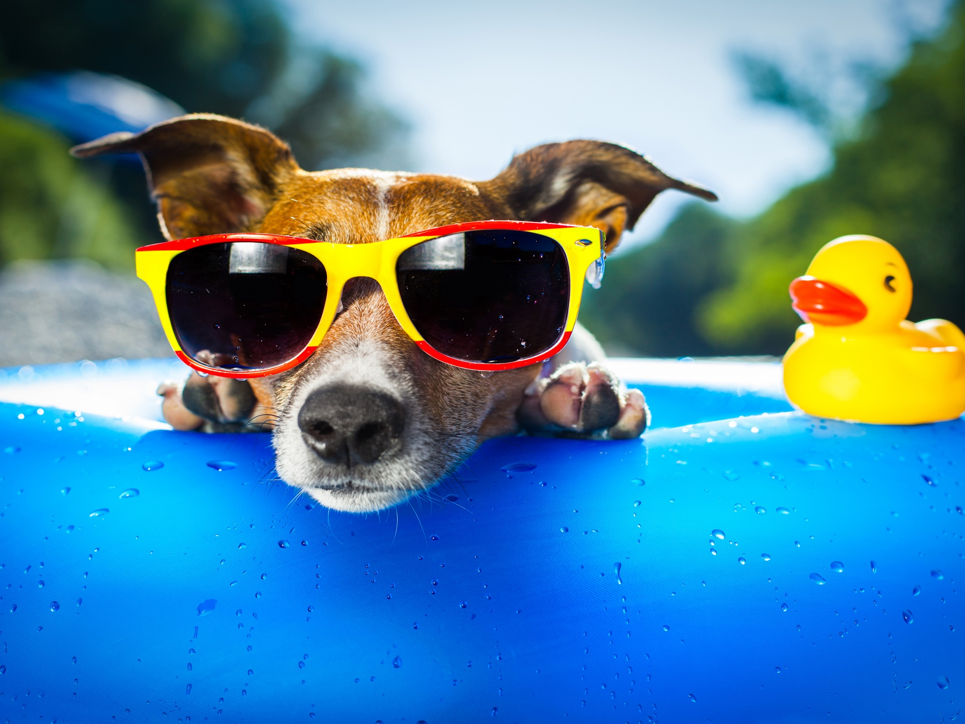 Funny Dog And Vacation Time