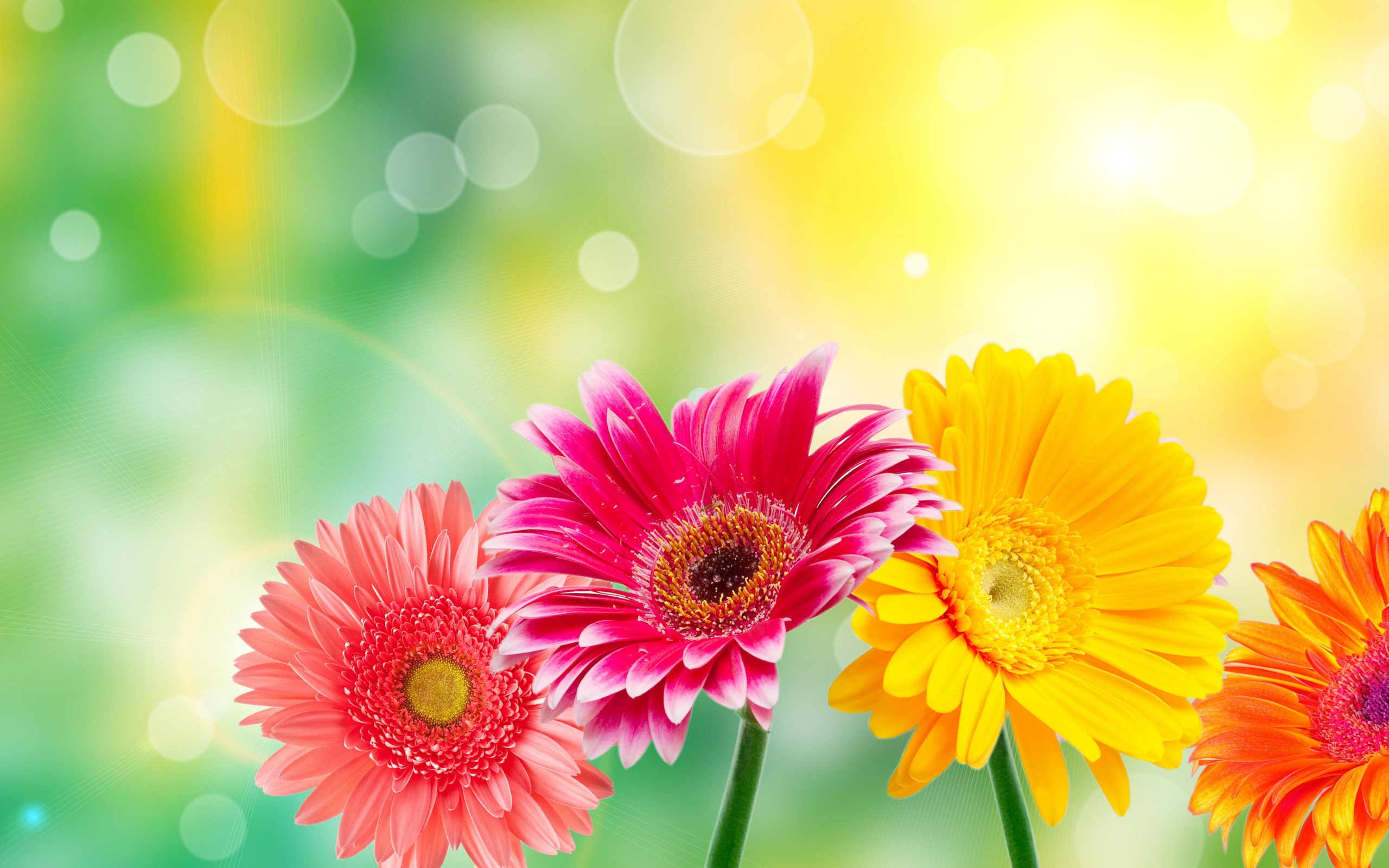 Image Of Spring Flowers