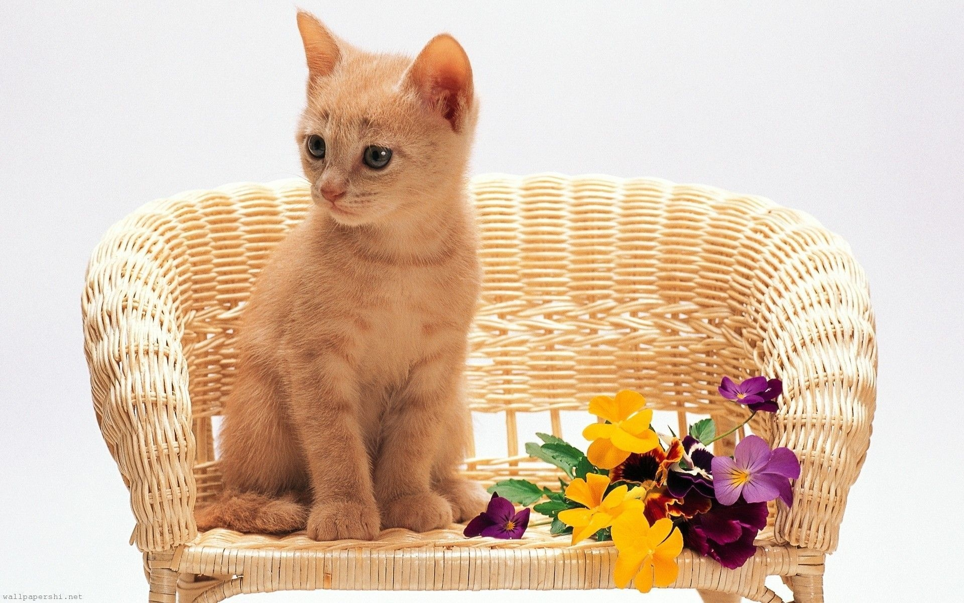 Kitten Sitting Flowers Red