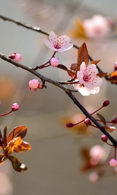Spring Blossoms Depth Of Field Trees