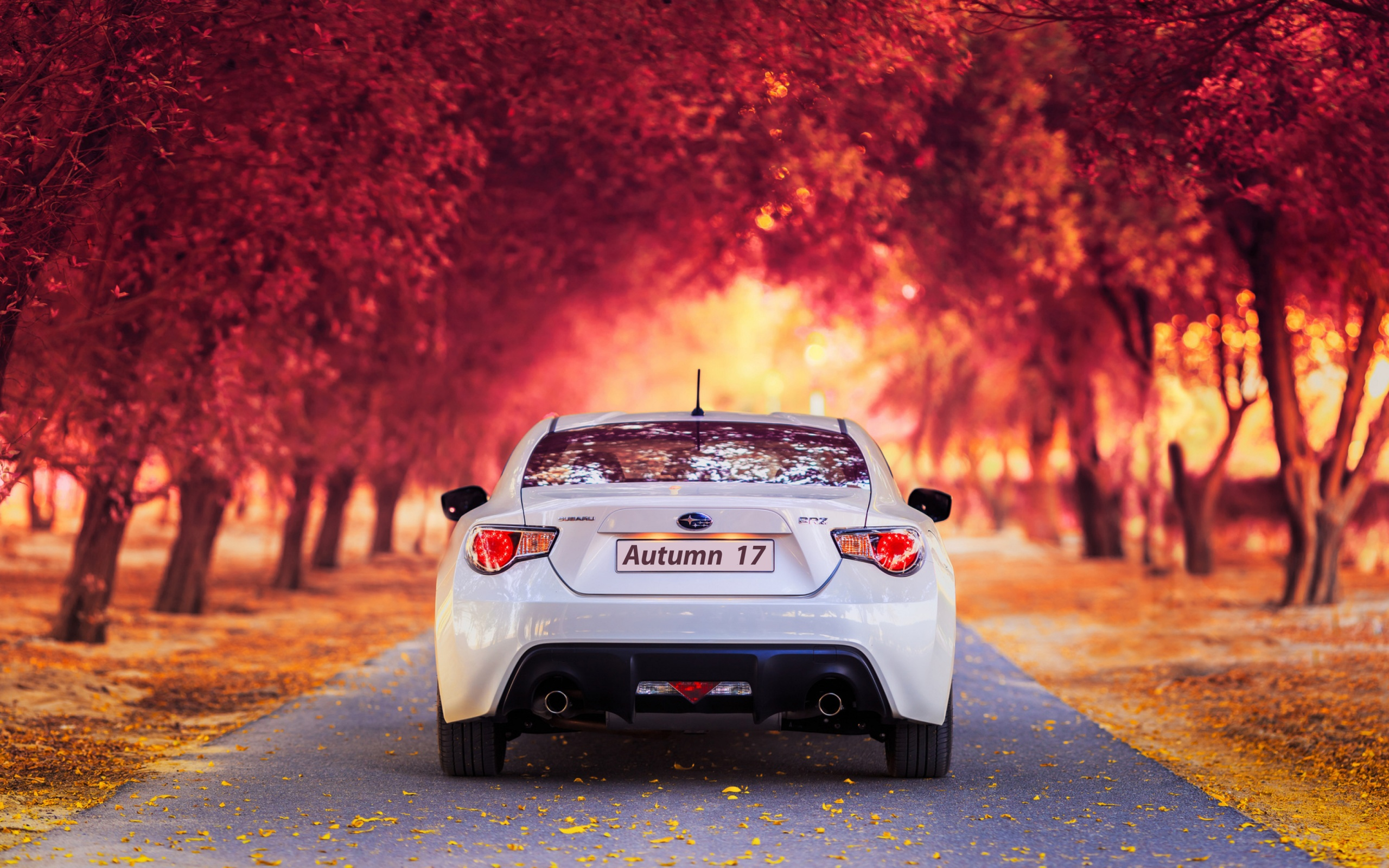 Subaru Car In Autumn