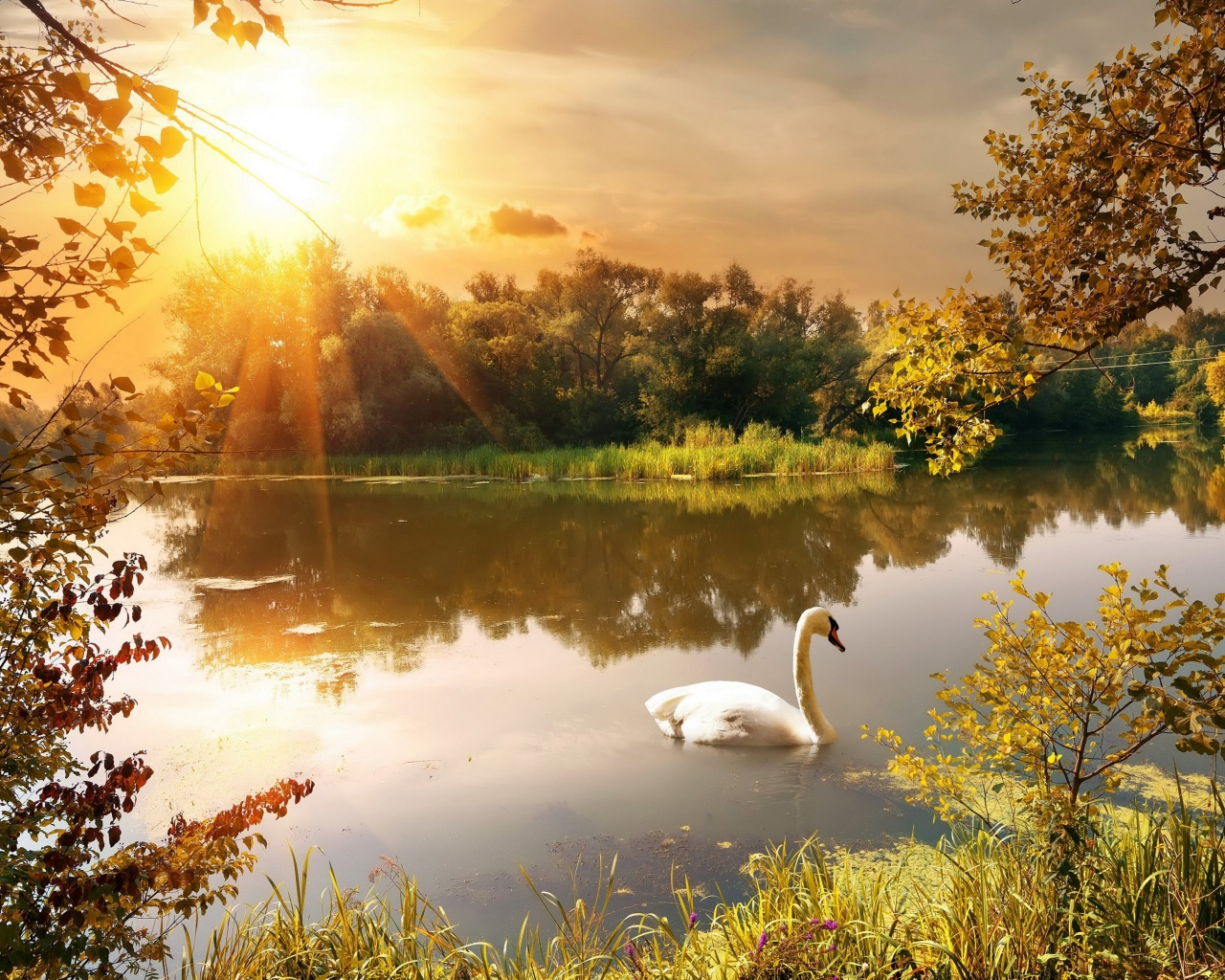 Swan On The Lake In Autumn