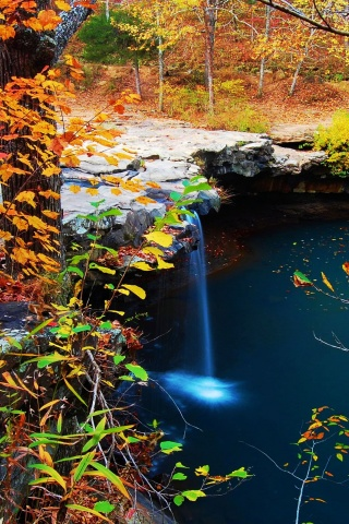 Waterfall Creek Autumn Leaves