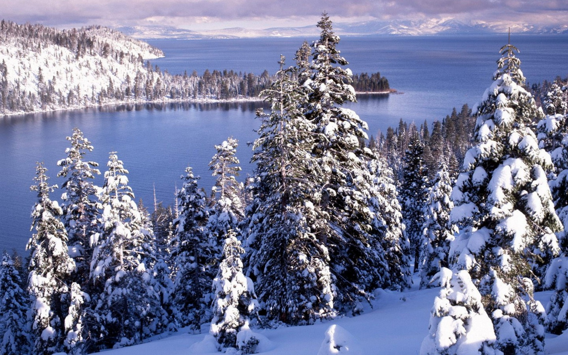 Winter White Forest And Cold Water